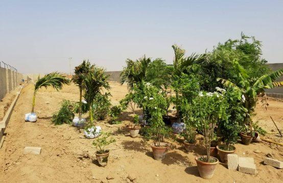 Agriculture FARM HOUSES Land on installments near ASF